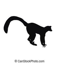 lemur, vettore, silhouette