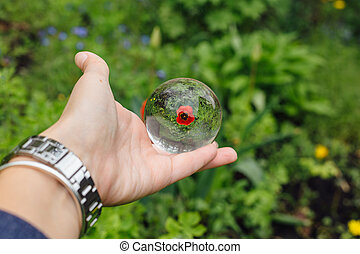 Lens ball in hand with reflection of red tulip