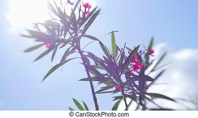 lensbaby, солнце, задний план, растение, синий, против, портрет, небо
