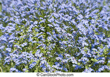 Lensbaby Shot of bright blue flowers, colourful background,...
