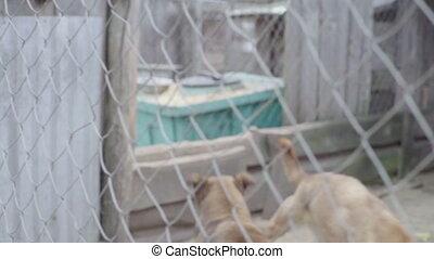 lent, chien, mouvement, shelter., sdf, chiens
