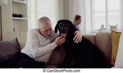 lent, chouchou, couple, motion., chien, intérieur, personne agee, home., heureux
