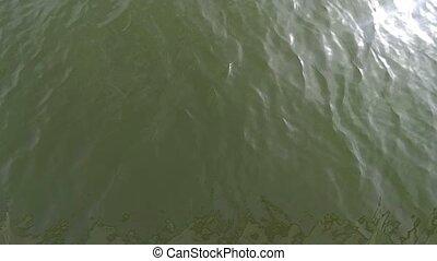 lent, coup, soleil, sommet, motion., surface, eau, éclats (flares), 120fps, vert, étincelant, vue., slomo