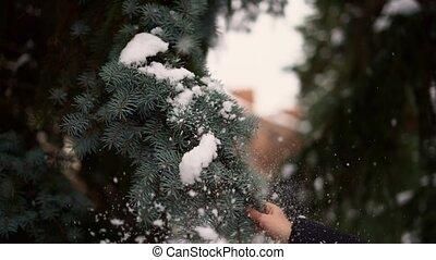lent, décembre, saison, mouvement, main, snow., vacances, pin, branche, secousse