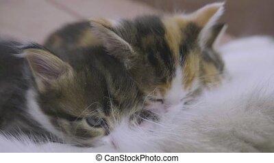 lent, elle, kittens., chatons, mésange, chat, mouvement, ...