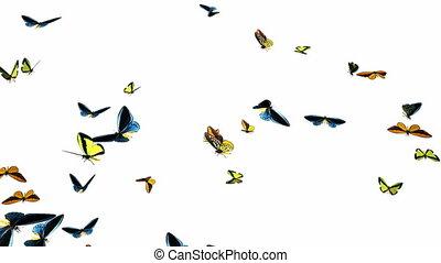 lent, faire boucle, 1, essaim, papillons, animation