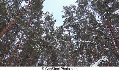 lent, hiver, métrage, neige, pin, seamless, mouvement, forêt, res., tomber, pro