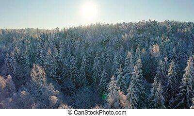 lent, hiver, neigeux, voler, haut, matin, forêt, au-dessus, froid, épique