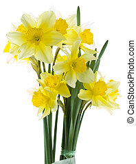 Lent Lily Cutout - Wild Daffodil Isolated on White...