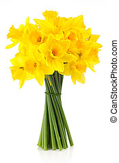 lent lily (daffodil) 2 - bouquet of yellow lent lill...