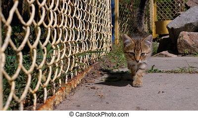 lent, marche, chaton, gris, rue., motion., barrière, sdf