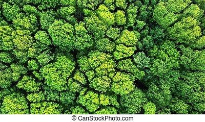 lent, oeil, vue panoramique, arbres verts, oiseau, bourdon, vidéo, forêt, gauche, aérien, right., bushes., 4k