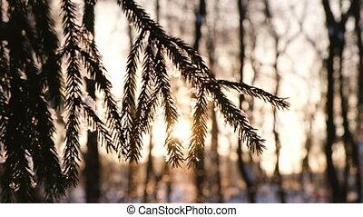 lent, oscillation, neige, mouvement, mensonges, forêt, branche, impeccable, coucher soleil, vent