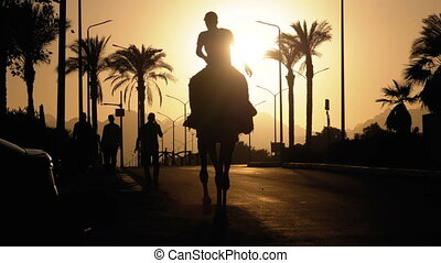 lent, silhouette, chameau, egypt., mouvement, bédouin, en mouvement, long, route, sunset.