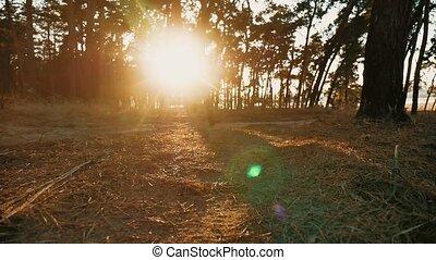 lent, silhouette, nature, athlétique, jeune, pin, mouvement, sain, courant, vidéo, sunlight., homme, style de vie, sport, forêt