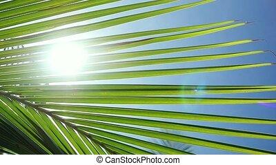 lent, soleil, feuilles, motion., lentille, paume, effets, fond, flamme, par, soleil, 1920x1080