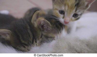 lent, style de vie, elle, kittens., chatons, mésange, chat, ...