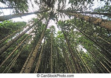 lente, ángulo, árboles, de par en par, bosque