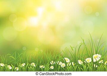 lente, achtergrond, natuur