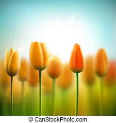 lente, achtergrond, tulpen