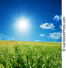 lente, akker, met, bloemen, en blauw, hemel