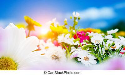 lente, akker, met, bloemen, madeliefje, herbs., zon, op, blauwe hemel