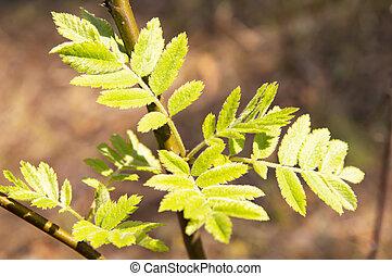lente, bladeren, -, boompje, aarde, spruiten, dag