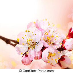 lente, blossom., abrikoos, bloemen, grens, kunst, ontwerp