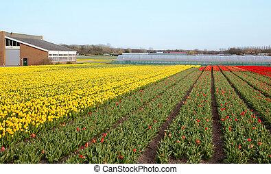 lente, boerderij