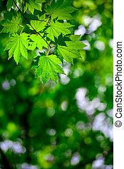 lente, bos, achtergrond