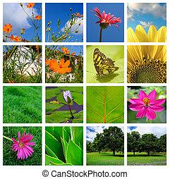 lente, en, natuur, collage