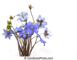 lente, flowers., bos