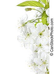 lente, grens, bloesems