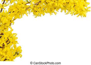 lente, grens, gele, bloesems