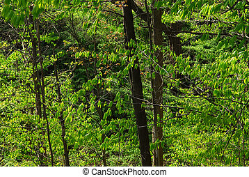 lente, groen bos