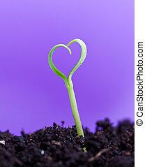 lente, hart gedaante, kiemplant