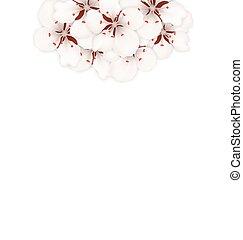 lente, kers, tekst, achtergrond, blossom , plek