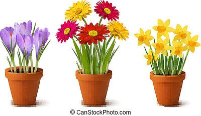 lente, kleurrijke bloemen, in, potten