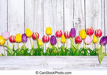 lente, kleurrijke, tulpen
