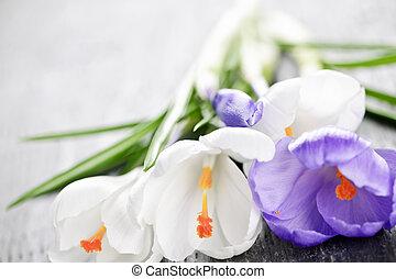 lente, krokus, bloemen