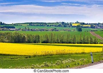 lente, landbouw, -, gele, aanranding, akker, boheems, paradijs, landscape, tsjechië
