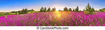 lente, landscape, panorama, met, bloeiend, bloemen, in, weide