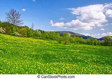 lente, landscape