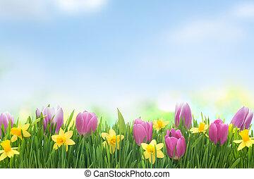 lente, narcis, en, tulpen, bloemen, in, groen gras