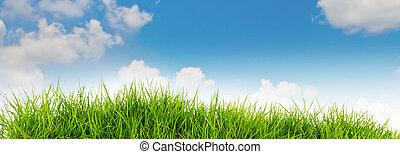 lente, natuur, achtergrond, met, gras, en blauw, hemel, in de rug, .summer, tijd