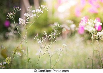 lente, of, zomer, abstract, natuur, achtergrond, met, gras, in, de, weide