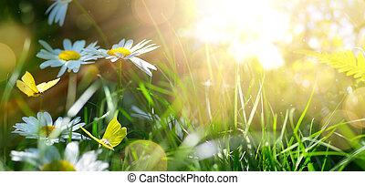 lente, of, zomer, natuur, achtergrond, met, bloeien, witte bloemen, en, vlieg, vlinder, tegen, zonopkomst, zonlicht