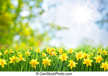 lente, pasen, achtergrond