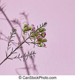 lente, samenstelling, een, tak, van, rose bloemen, op, een,...