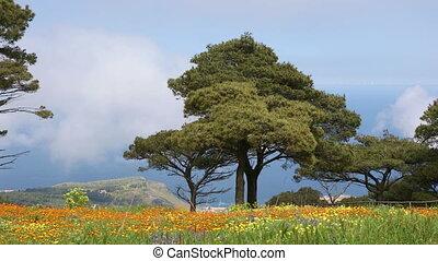 lente, siciliaan, landscape, natuur